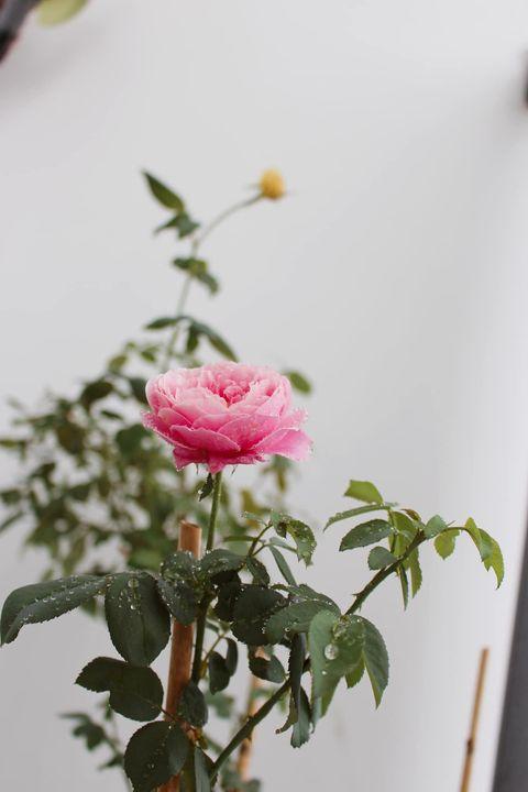 Mê hoa ở mọi cấp độ mọi người ạ Nên hoa thật hoa giả đều mê