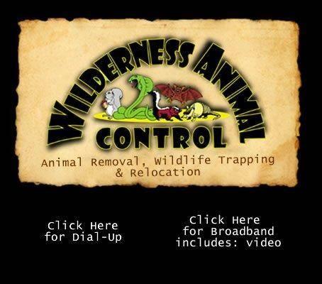 Wilderness Animal Control updated their address.